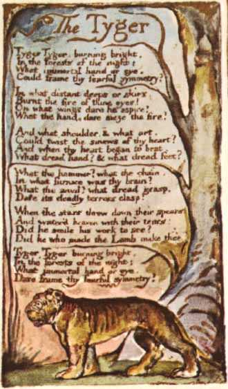 the tyger william blake The tyger tyger tyger, burning bright, in the forests of the night what immortal  hand or eye, could frame thy fearful symmetry.